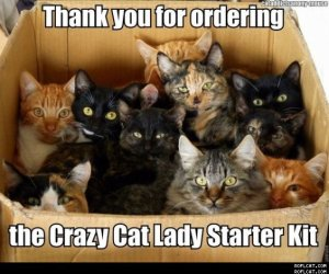 Cat_Lady_Starter_Kit_
